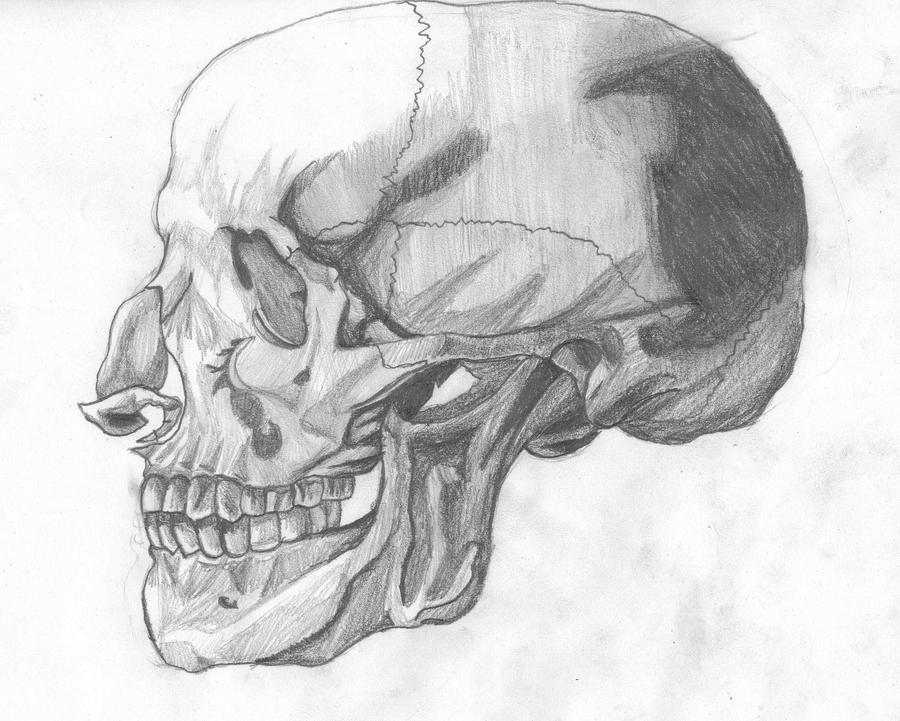 Skull drawing side view by code14 on DeviantArt