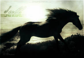 I u l l by Horseryder