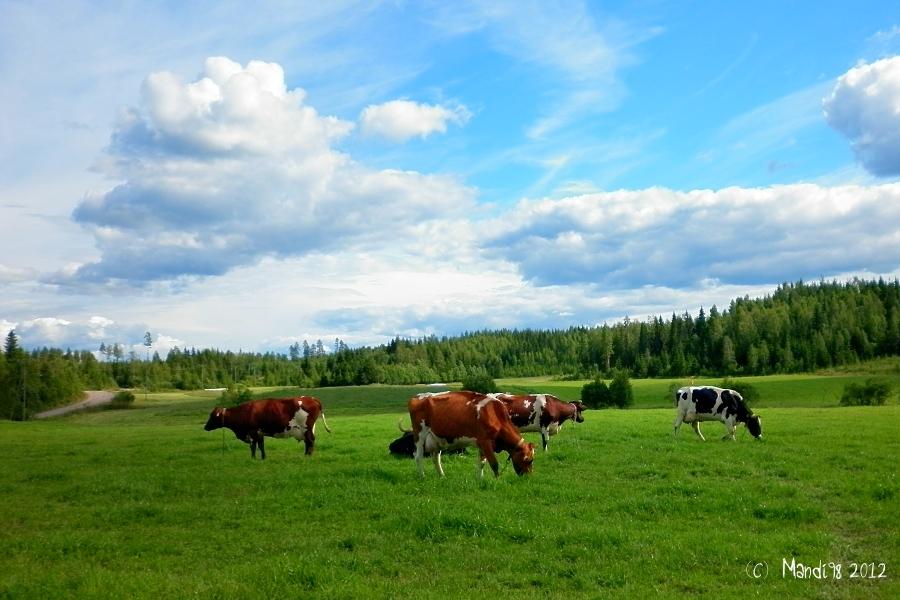 Finnish Countryside by Mandi98