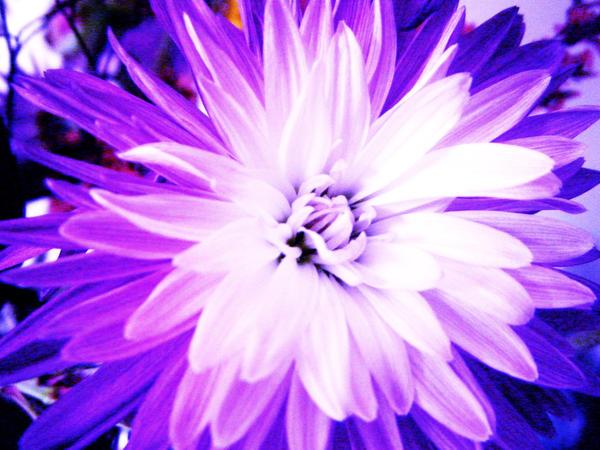 Play Purple by JamiLynn