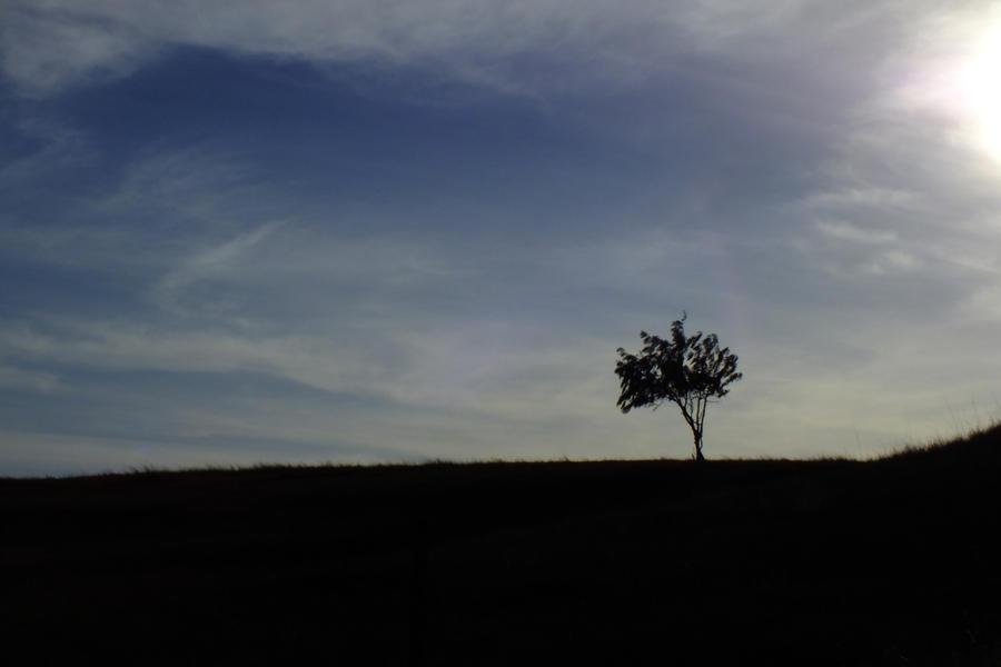 Single tree by hsbzh