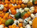 Pumpkins of All Sorts by subversiveplot