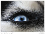 Eye of a Husky by neeth1um