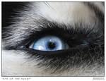Eye of a Husky