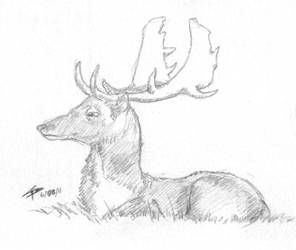 Deer by vphamv