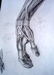 Anatomy Study : Ligaments