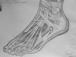 Anatomy Study: Extensor Sinews
