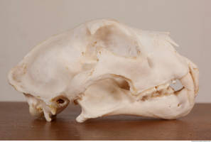 Photo Reference Of Skull