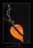 Lantern lit paths... by soul-purpose