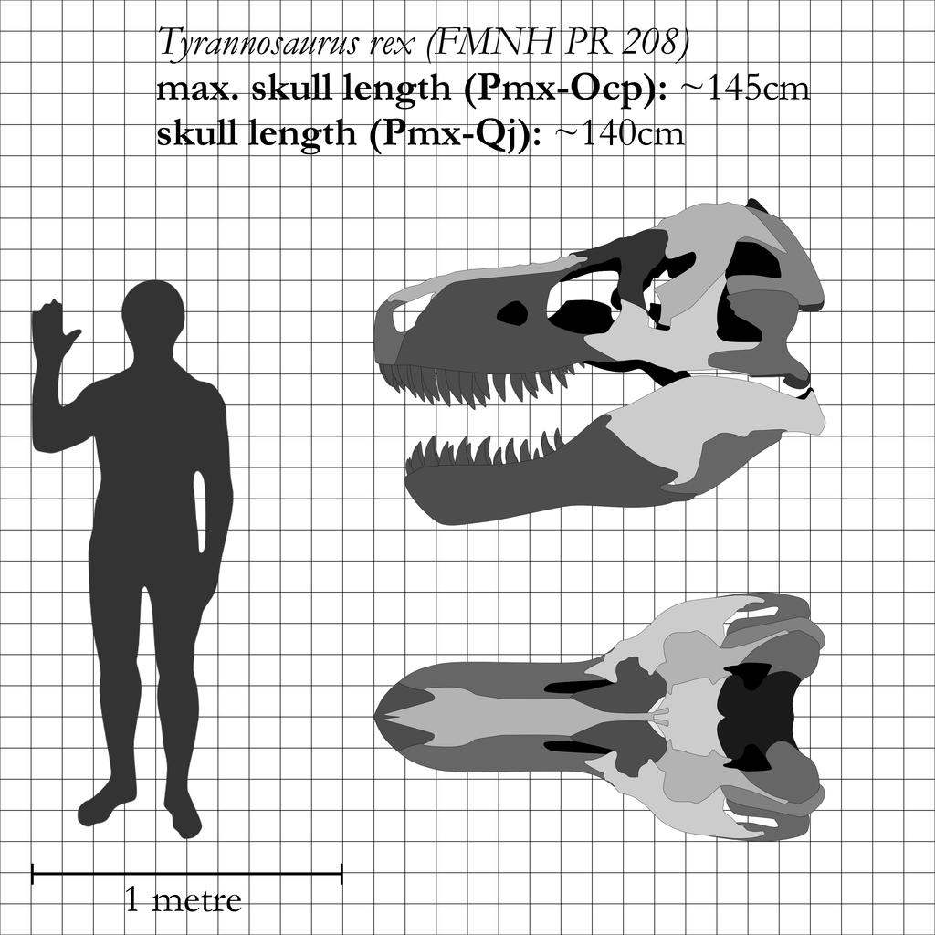 T. rex: the most iconic skull ever