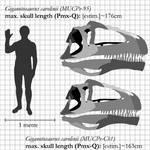 Giganotosaurus-longest Theropod skull?