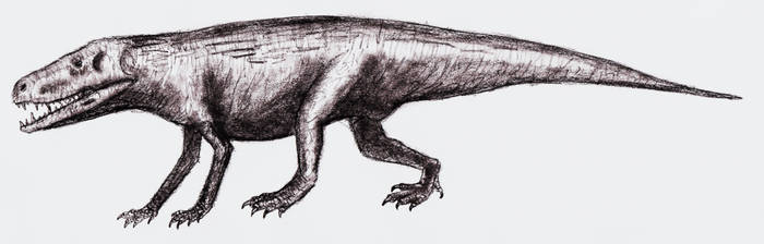 Batrachotomus kupferzellensis  by theropod1