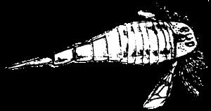 theropod1's Profile Picture