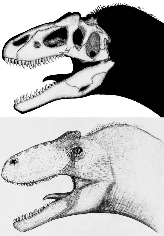 Allosaurus sp. by theropod1