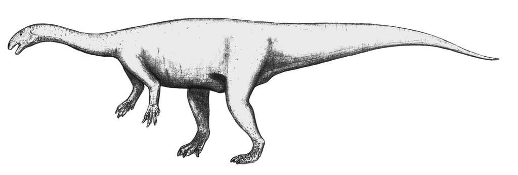 Plateosaurus engelhardti by theropod1