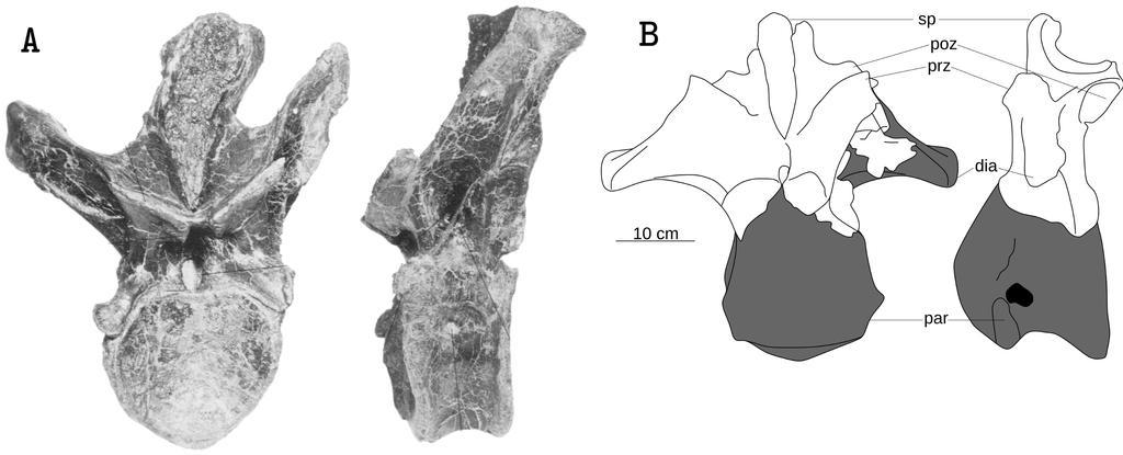 Epanterias Tyrannosaurus by theropod1