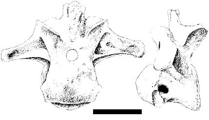 Epanterias by theropod1