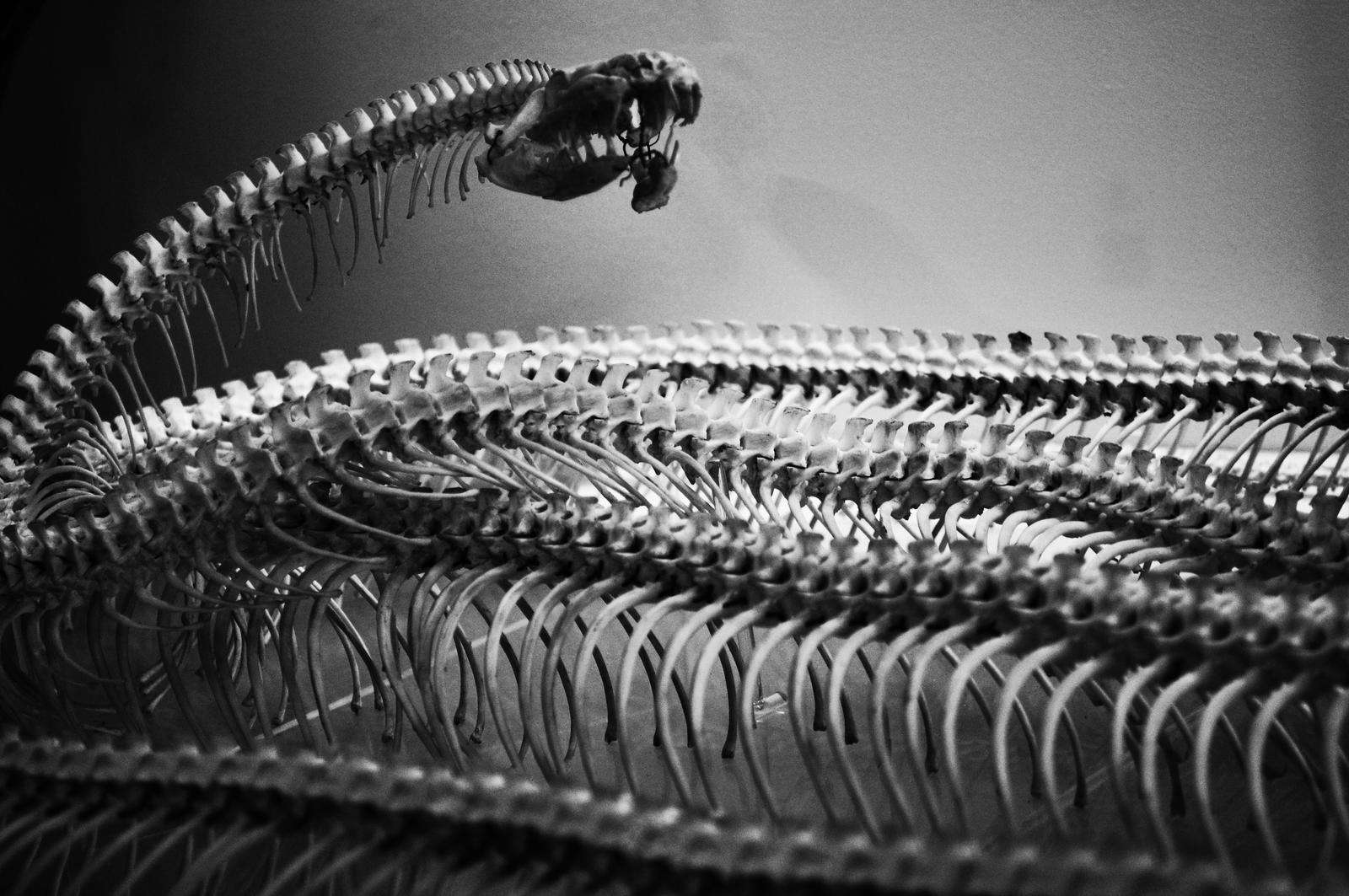 Snake by Cherryred5
