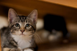Kittens Under the Bed by Lunareye