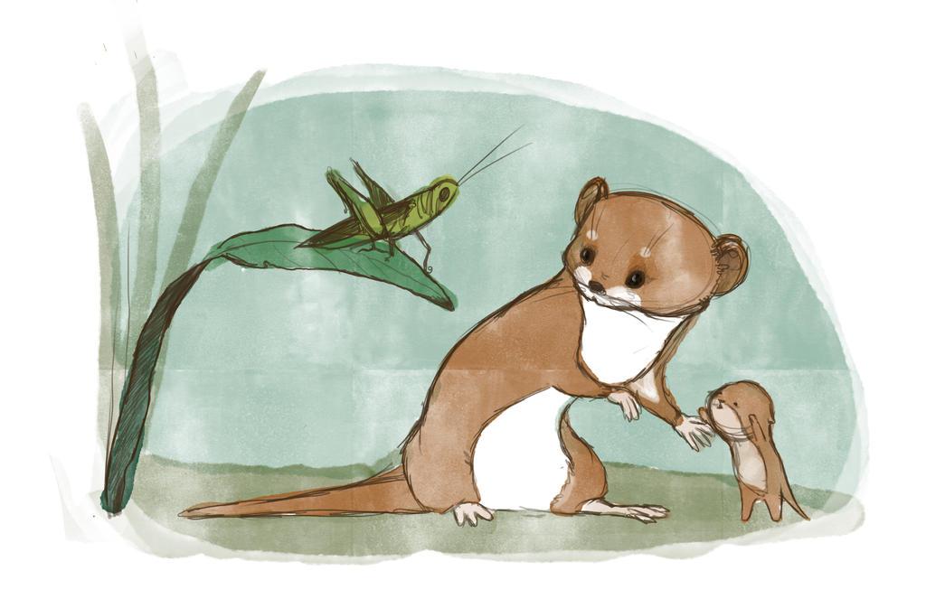 Weasels by PodwojneD