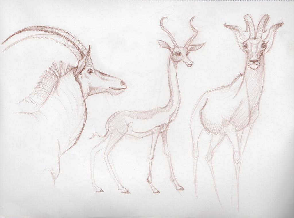 Gazelles by PodwojneD