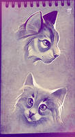 Cat doodles by VixieArts