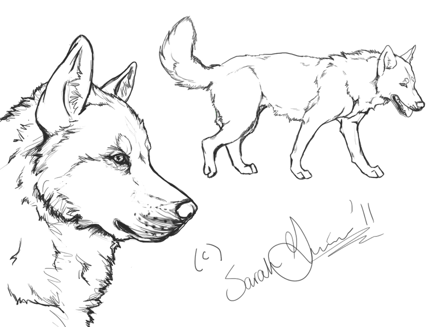 free coloring pages unicorn siberian husky | Siberian Husky Lineart by airhead77 on DeviantArt
