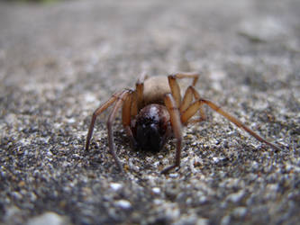 Ground Spider, grounded