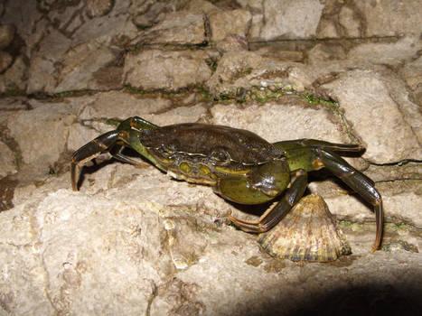 Crabit
