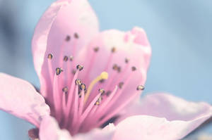 Spring by Wakeupnaked