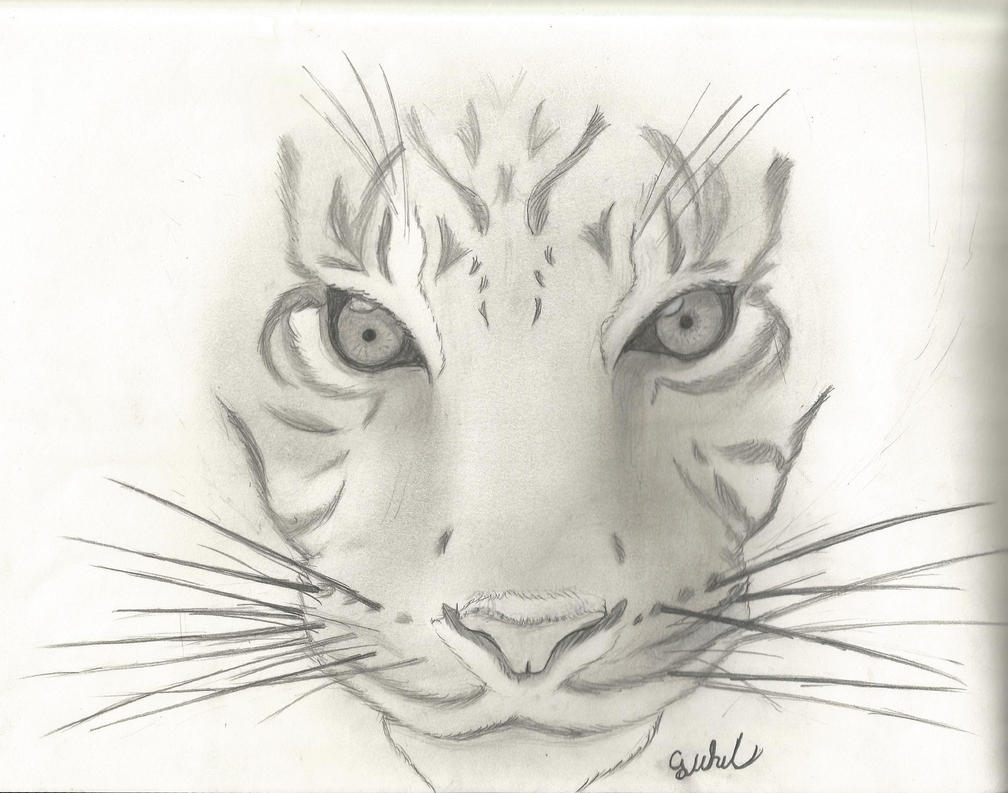 sketched animals - Romeo.landinez.co