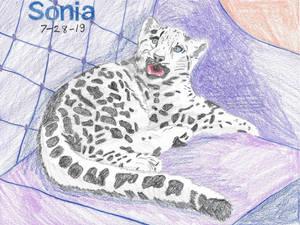 Sonia 19-28-7
