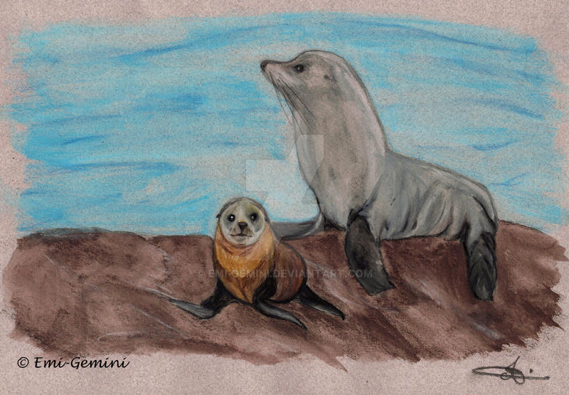 New Zealand - Sea Lion and her baby by Emi-Gemini