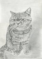 Beau Cat by theshadedartist
