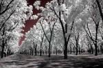 Infra Orchard
