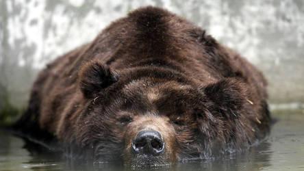 Don't wake a sleeping bear. by Boggiewu
