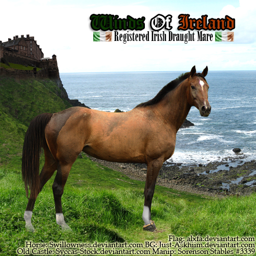HEE Winds Of Ireland - Horse ~2017~ by GabriellasFantasy
