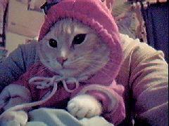 buddy xmas kitty by bethefawn