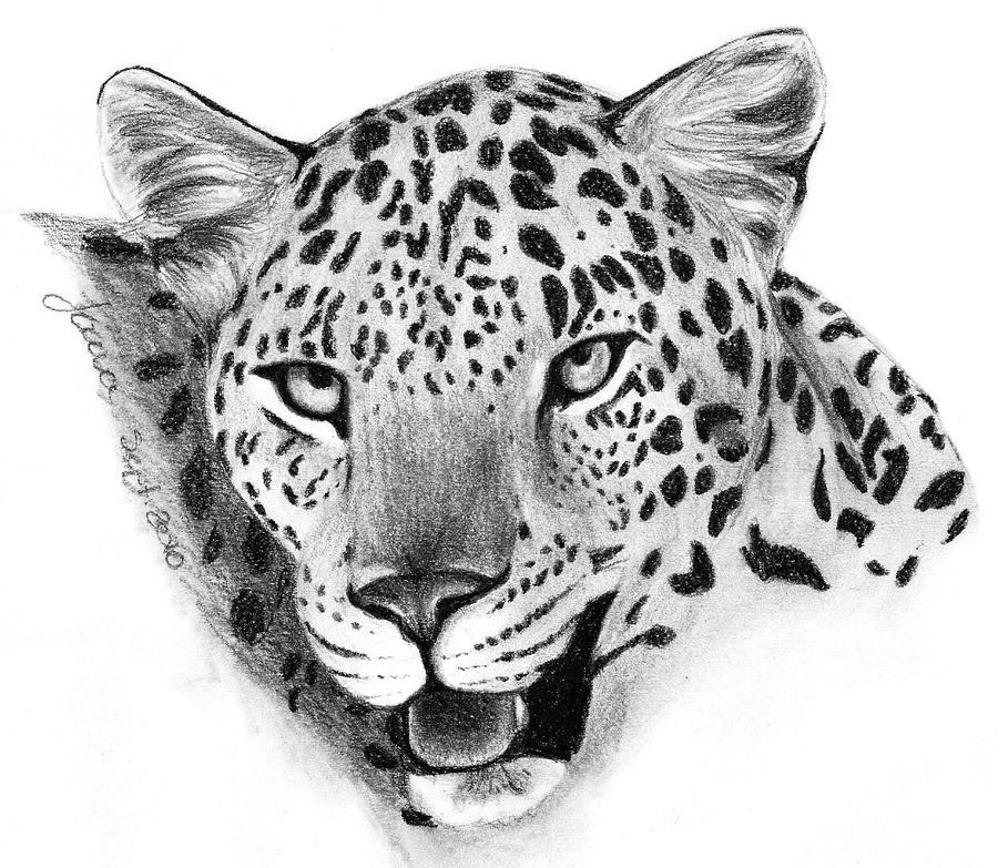 Leopard Pencil Drawings Leopard Face 2 by Joav...