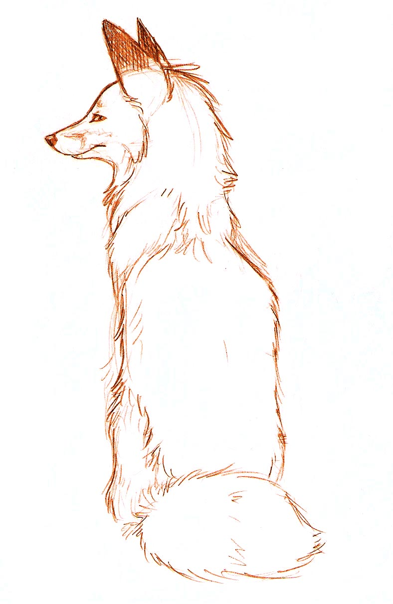how to draw a wolf sitting