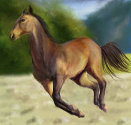Brown Horse by Joava