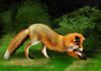 Stretchy Fox by Joava