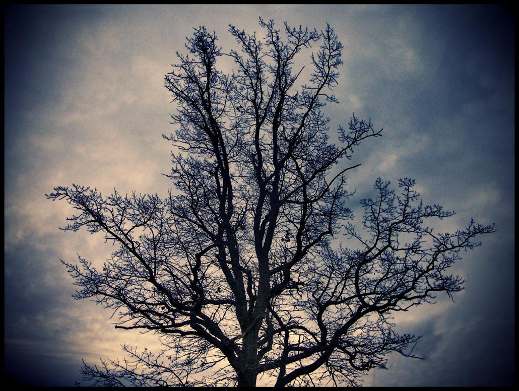Dark Tree by Teadux on DeviantArt