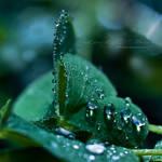 .: Lucky Tears :. by hellfirediva