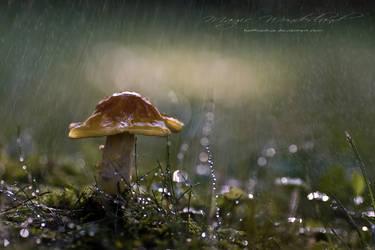 Magic Wonderland by hellfirediva