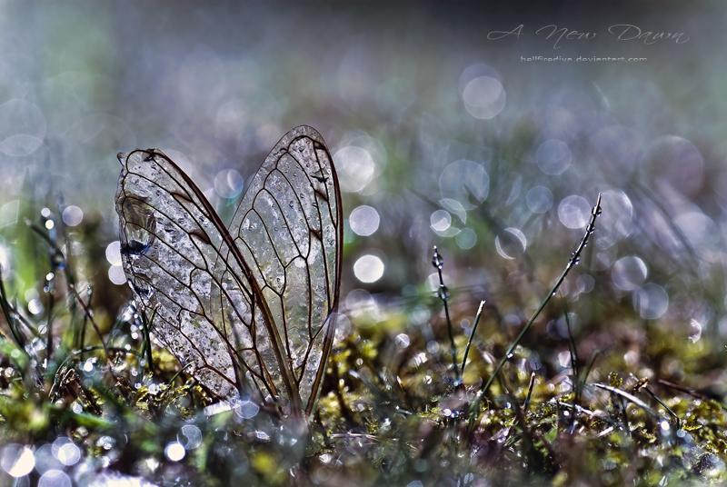 : A New Dawn : by hellfirediva