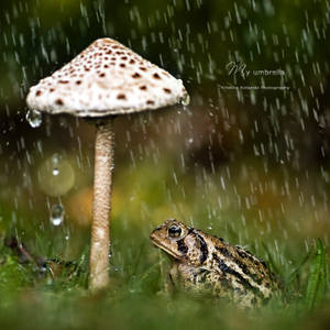 : my umbrella :