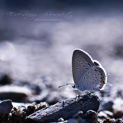 .: Evening Sonnet :. by hellfirediva