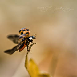 .: Fly Away :. by hellfirediva