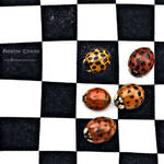 : beetle chess : by hellfirediva